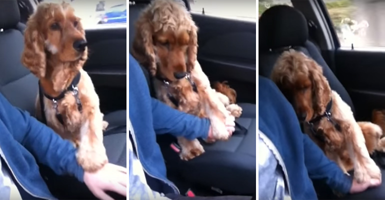 Nervous Dog Wants To Hold Hands While Driving