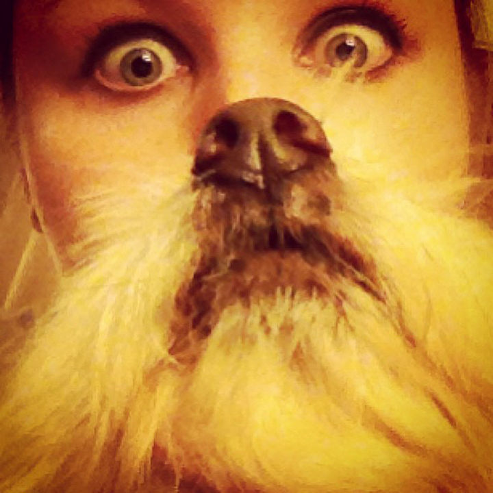 20 Funniest Dog and Cat Beards Ever - Dogbearding done right.