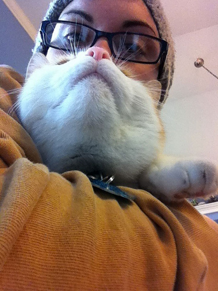 20 Funniest Dog and Cat Beards Ever - Purrrfectly done.