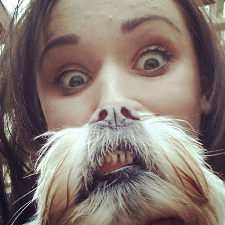 "20 Funniest Dog and Cat Beards Ever - ""Do I have any spinach between my teeth?"""