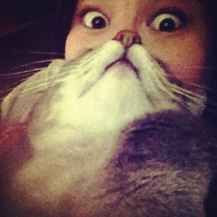 20 Funniest Dog and Cat Beards Ever - Human...are you taking my picture?