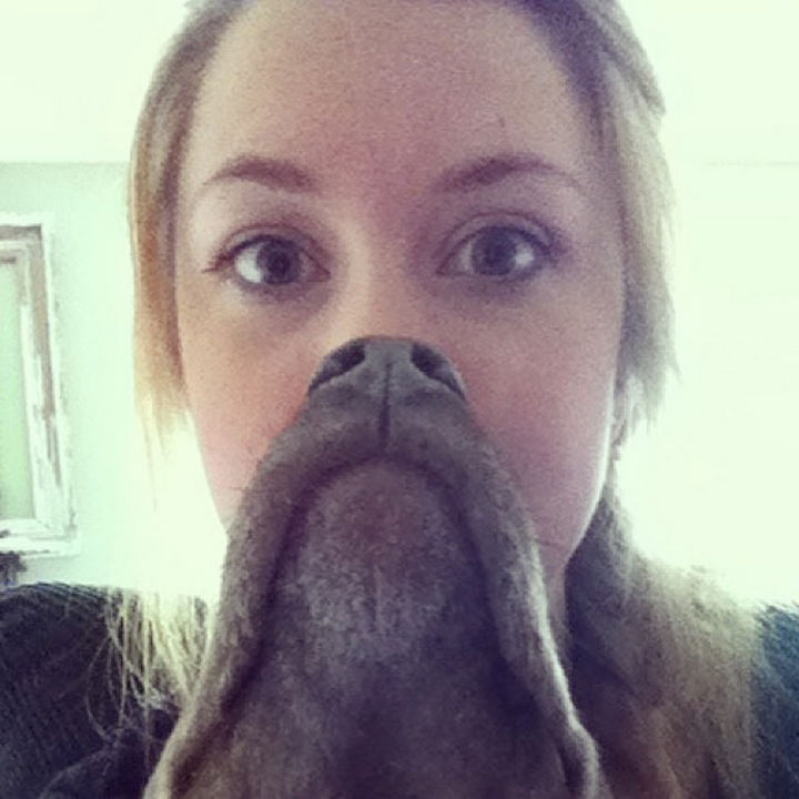 20 Funniest Dog and Cat Beards Ever - Rockin' a goatee.