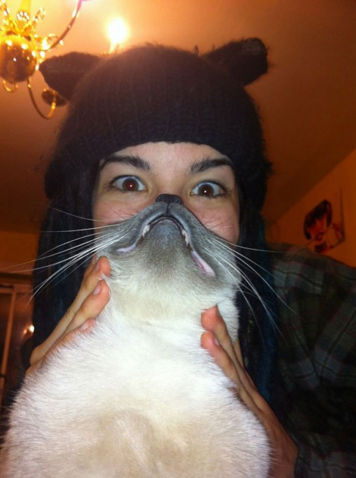 20 Funniest Dog and Cat Beards Ever - Hear me roar...meow. Awesome cat beard.