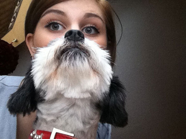 20 Funniest Dog and Cat Beards Ever - Don't mess with this dog beard, it's perfect.