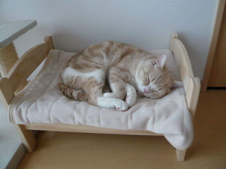 This $15 Duktig doll bed from IKEA is every cat's dream bed. It can be transformed into DIY IKEA cat beds that any feline lover can easily assemble.