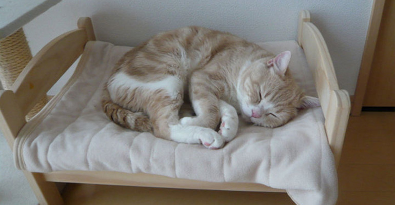 Japanese Feline Lovers Turn IKEA Doll Beds into Luxurious Cat Beds