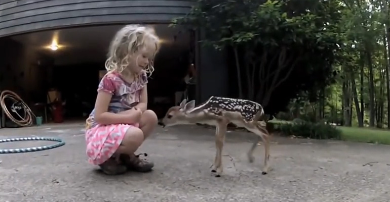 "Newborn Fawn Comes out of the Woods to Meet a Little ""Deer Whisperer"" Girl."