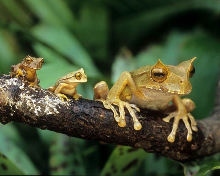 20 Animal Families - A tree frog and her young ones.