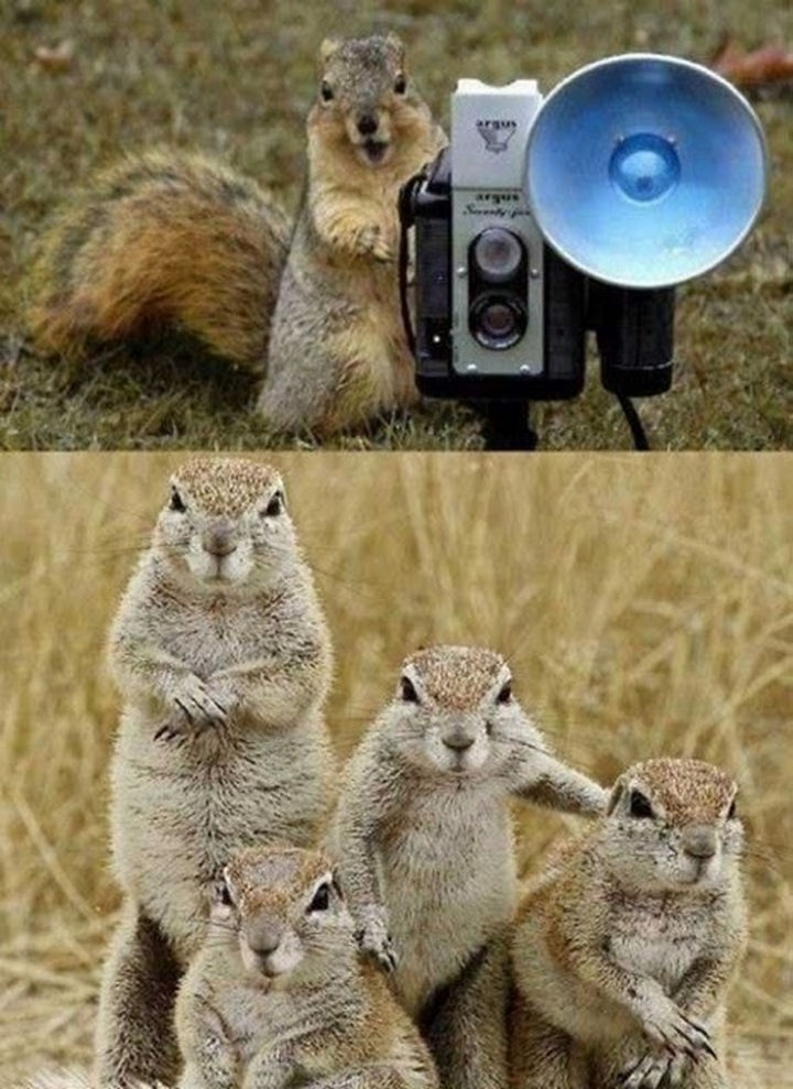 20 Animal Families - A family of squirrels getting ready for a family portrait. Smile!