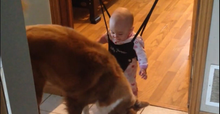 What this Dog Does While Baby Is in Her Jumper Is Hilarious.