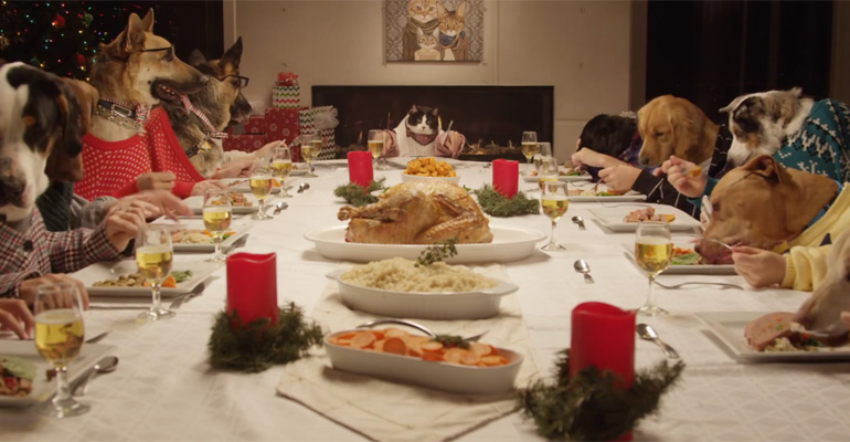 13 Dogs and 1 Cat Are Treated to a Holiday Meal.