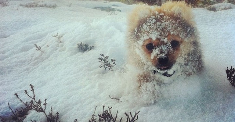 18 Animals That Look Adorable Playing in the Snow
