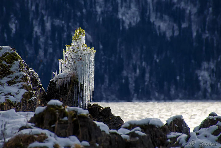 22 Ice and Snow Formations - Frozen Pine Tree on Lake Teletskoye in Russia.