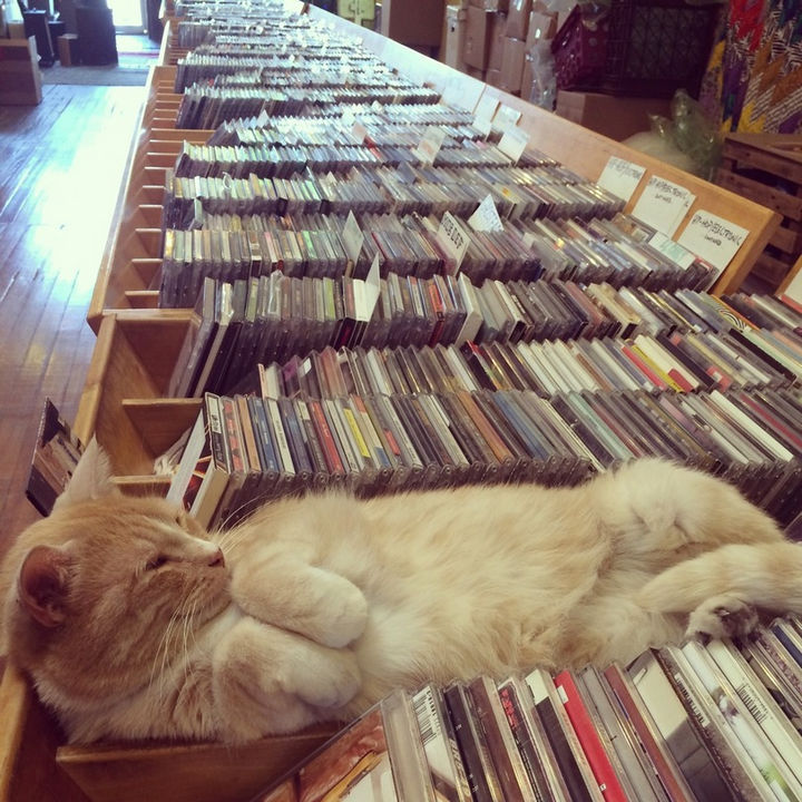 24 Cats Asleep in a State of Bliss - Sleeping on the job.