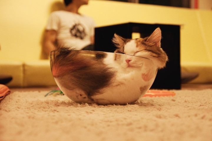 24 Cats Asleep in a State of Bliss - When the milk bowl is empty, we sleep in it.