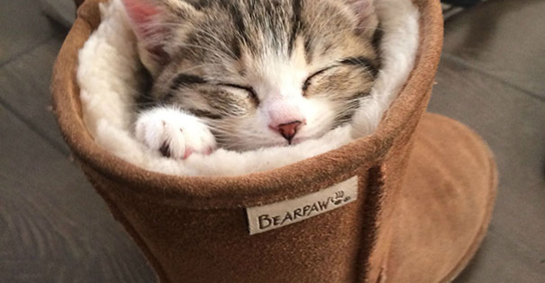 24 Cats Asleep in a State of Bliss in the Most Interesting Places.