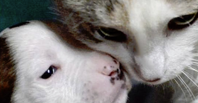 Cat Adopts Newborn Pit Bull Puppy That Was Abandoned.