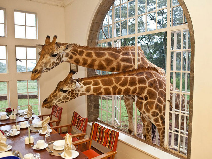 12 Amazingly Cool Hotels - Image 3 - Giraffe Manor, Kenya.