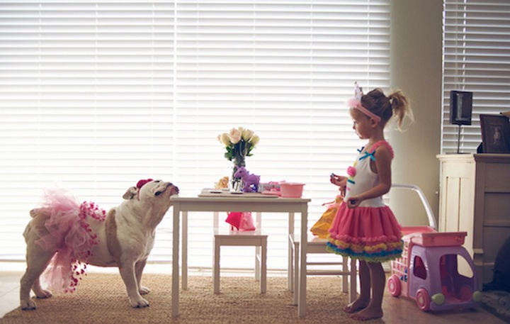 15 Things Only Bulldog Owners Will Understand - They are awesome with children and have enough patience to put up with anything.