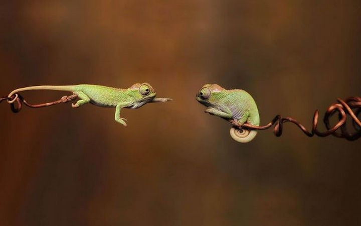 18 cute pictures of lizards and reptiles - Everybody can use a helping hand once in a while.