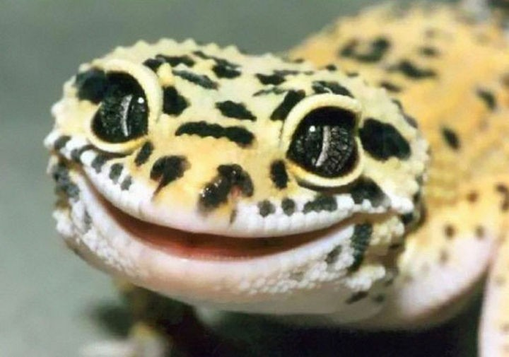 18 cute pictures of lizards and reptiles - What a adorable smile on this cute leopard gecko.