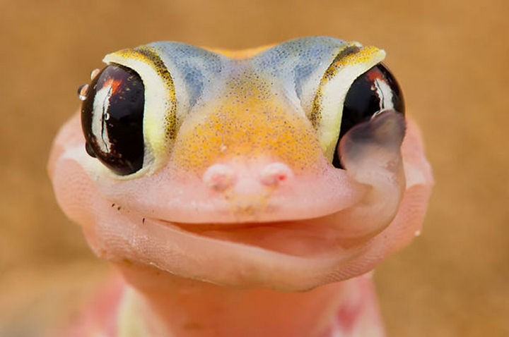 18 cute pictures of lizards and reptiles - Another winning smile!