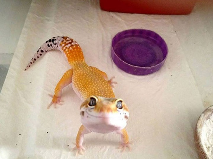 18 cute pictures of lizards and reptiles - Somebody looks happy!