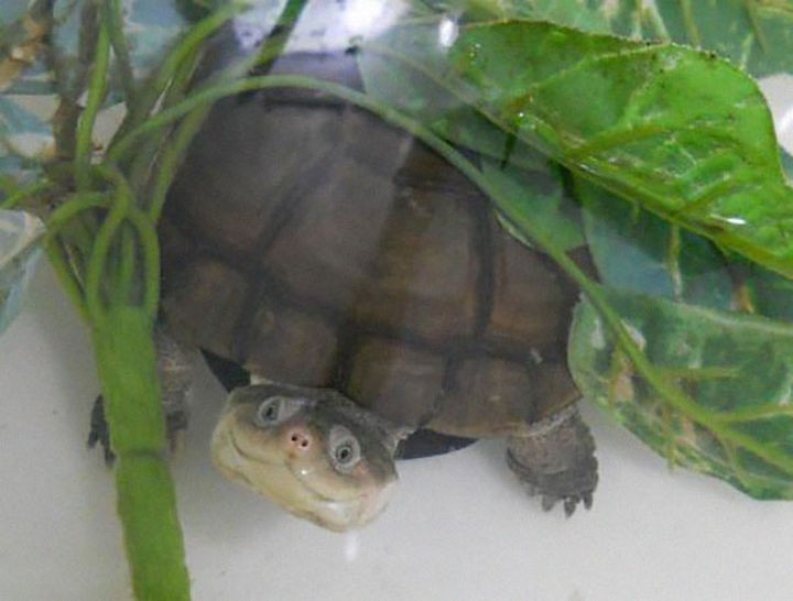 18 cute pictures of lizards and reptiles - This turtle is as happy as can be.