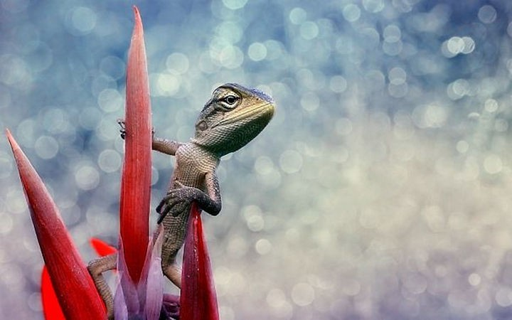 18 cute pictures of lizards and reptiles - A cool lizard in an action hero pose.