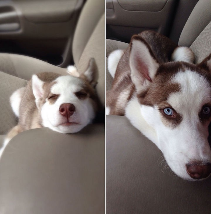 24 Before and After Photos of Pets and Their Humans - 7-month difference.