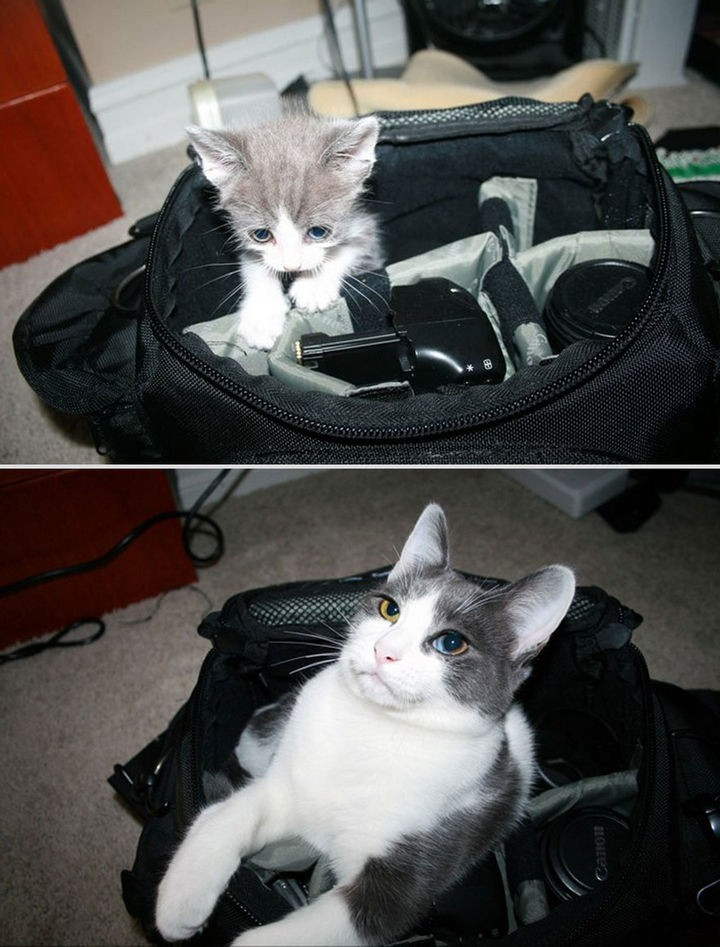 24 Before and After Photos of Pets and Their Humans - 6 month difference.