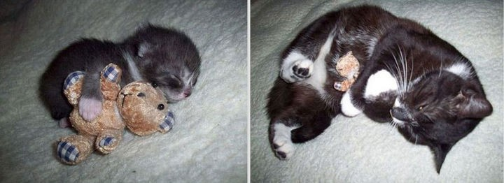 24 Before and After Photos of Pets and Their Humans - Before and after.