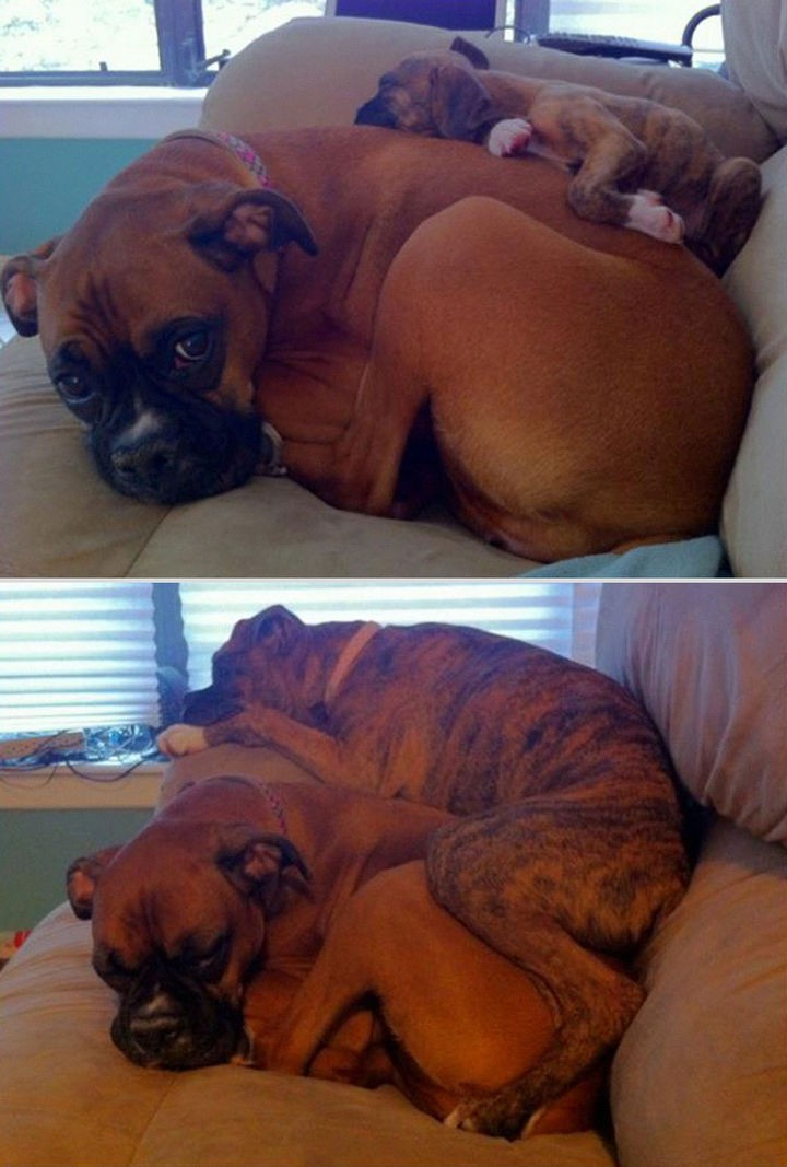 24 Before and After Photos of Pets and Their Humans - 3 month difference.