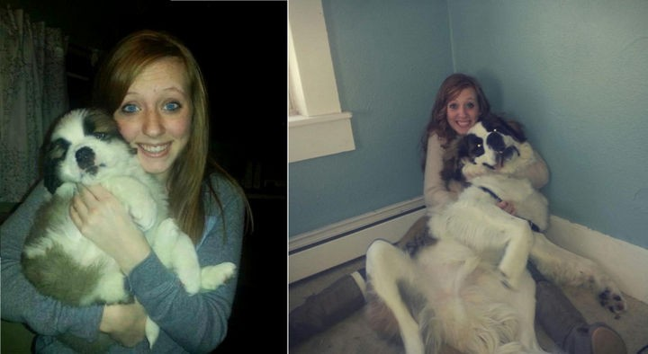 24 Before and After Photos of Pets and Their Humans - 1 year difference.