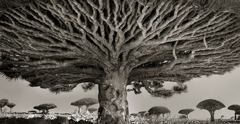 A Photographer Spent over 14 Years Capturing Images of the Oldest Trees on Earth and They Are Magnificent