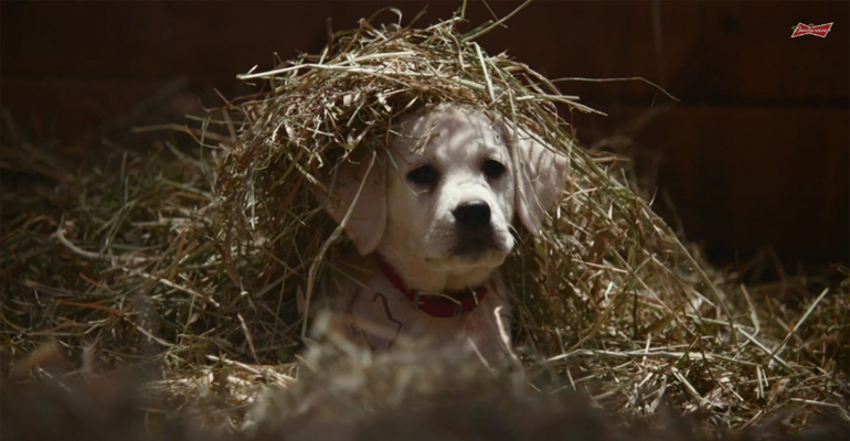 Budweiser's 2015 Super Bowl Ad Brings More Puppy Goodness.