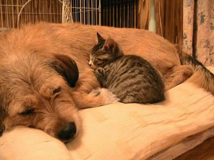 23 Dogs and Cats Sleeping Together - A lazy afternoon.