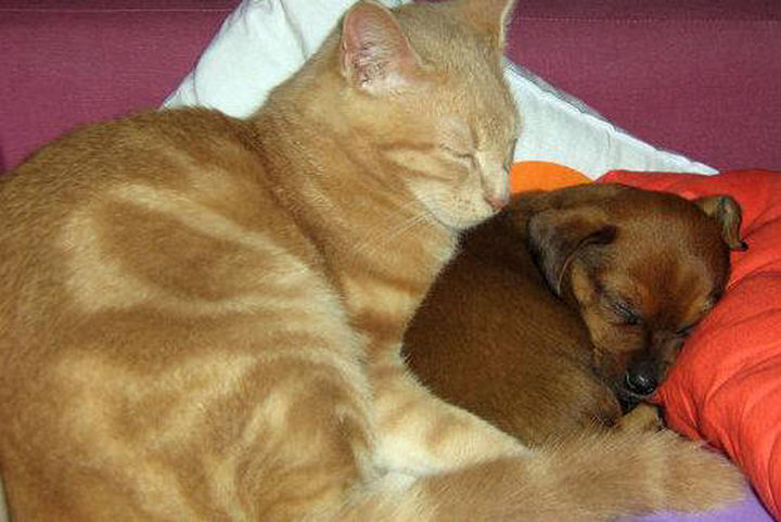 23 Dogs and Cats Sleeping Together Are so Cute You'll Melt