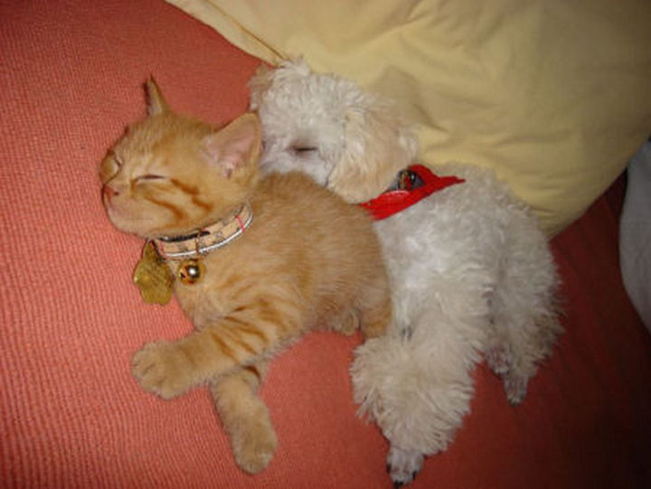 23 Dogs And Cats Sleeping Together Are So Cute You Ll Melt