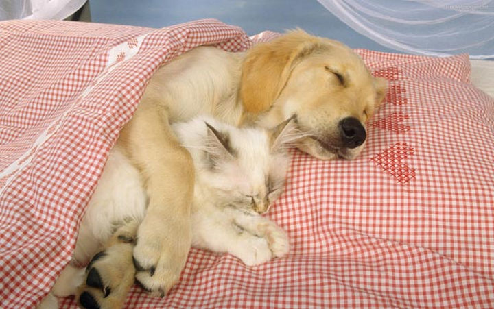 23 Dogs And Cats Sleeping Together Are So Cute Youll Melt