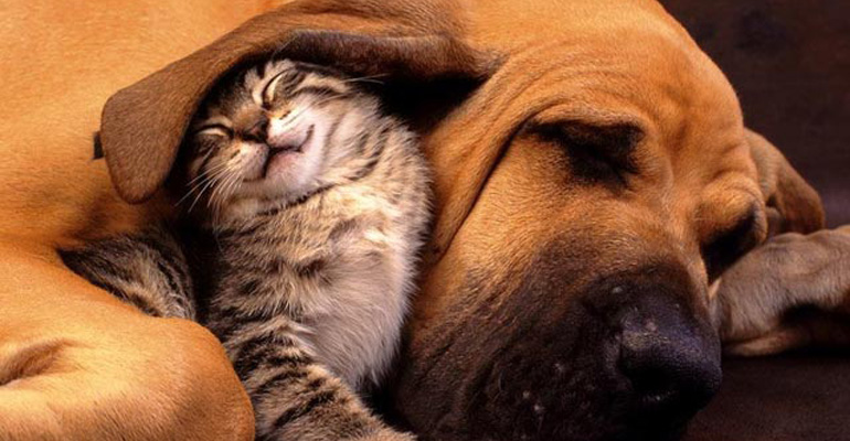 Cats and Dogs Sleeping Together Are so Cute You'll Melt
