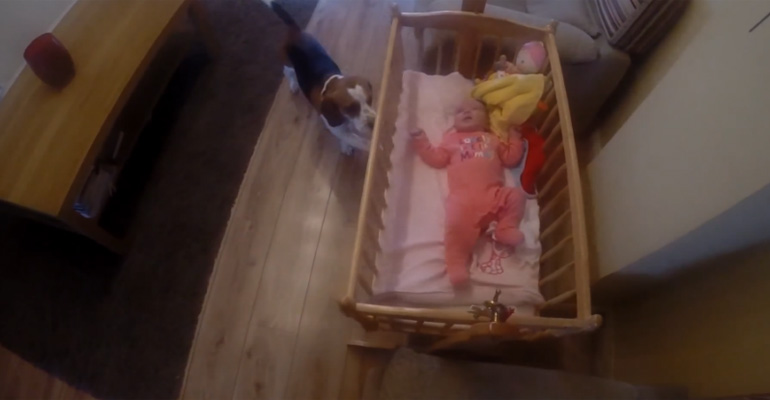 Charlie the Beagle Rocks Newborn Baby to Sleep.