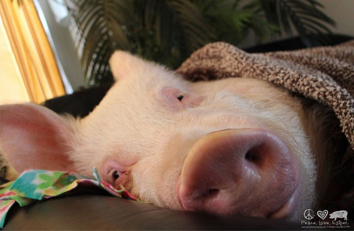 Even Esther needs her beauty rest.
