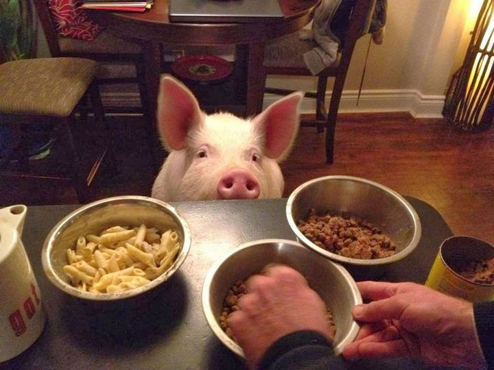 Once they realized how intelligent pigs were, they stopped eating meat and both are now vegans.