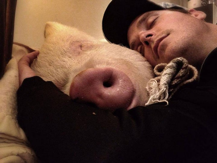 Raising a pig is hard work and can be tiring but it's all worth it.