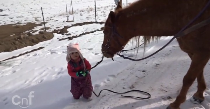 Sweet Little Toddler Takes Her Best Friend Cinnamon for a Walk.