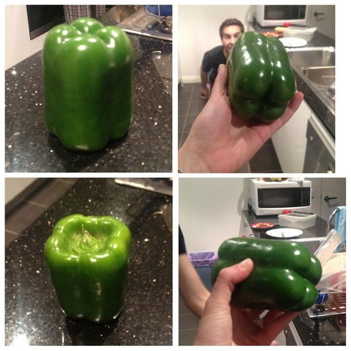19 Photos Perfectionists Will Love - A perfectly shaped green pepper.