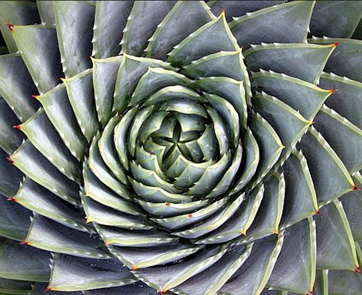 19 Photos Perfectionists Will Love - The always perfect spiral aloe plant.