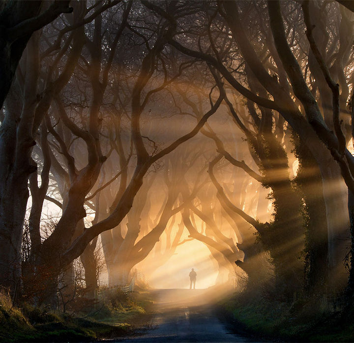 17 Pictures of the Prettiest Trees on Earth - The Dark Hedges In Northern Ireland (Night).