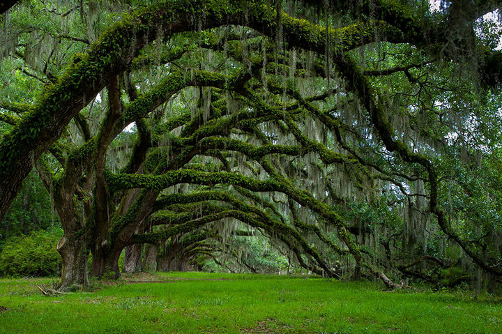 17 Pictures of the Prettiest Trees on Earth - Avenue Of Oaks At Dixie Plantation In South Carolina.